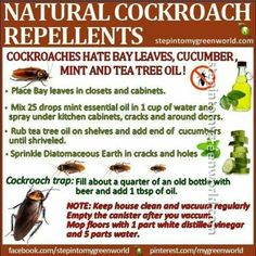 As far as possible, this post will concentrate on pest control tips that would assist keep away as much pests as you can. Some of the advises provided here will deal on specific pests but some may … Cockroach Repellent, Insect Repellent, Mice Repellent, Handy Gadgets, Roach Killer, Weed Killer, Natural Cleaning Products, Natural Products, Pest Control