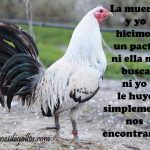 Frases Para Un Buen Gallero Con Gallos Finos Rooster Breeds, Chicken Breeds, Angry Birds, Hens, Fajardo, Maui, Owl, Animals, Beautiful Things