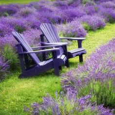 Wallpaper by section: Nature Plants, Lavender Farm, Outdoor, Lavender Blue, Lavender Garden, Shades Of Purple, Lavender Cottage, Nature, Beautiful Gardens