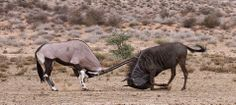 1X - You do not bring a knife to a sword-fight... by Morkel Erasmus