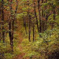 ROTHROCK STATE FOREST, PENNSYLVANIA: This massive, Central Pennsylvania State Forest is home to smooth dirt roads, steep, rocky, and challenging singletrack, and everything in between.