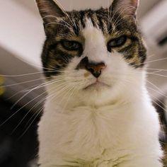 実家の猫。ソロちゃん。 下から見る顔好き。 #猫#ねこ#愛猫#ねこすたぐらむ#可愛い#どんな顔も可愛いね#一眼レフ初心者#パンケーキレンズ#cat#photography#ファインダー越しの私の世界