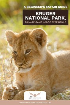 Get the complete guide to staying in a private game lodge and going on a safari in Kruger National Park. The perfect place for a first time African safari is in Kruger National Park in South Africa. Find the best Kruger National Park lodges and a complete guide to taking a South African safari. Get a complete guide full of African safari tips including exactly what to expect on your Kruger National Park safari. African safari photography | Kruger National Park South Africa | South Africa… Kruger National Park Safari, National Park Lodges, National Parks, Solo Travel, Travel Tips, Game Lodge, Private Games, Game Reserve, Wild Dogs