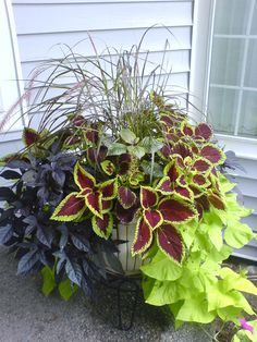 mixed foliage container (tips for color combinations and keeping the plants looking their best.)