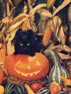 Halloween Pictures, Spooky Halloween, Vintage Halloween, Halloween Pumpkins, Halloween Black Cat, Neko, Black Cat Aesthetic, Cat Pumpkin, Pumpkin Squash