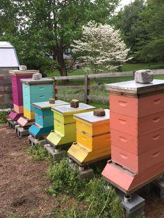 die 118 besten bilder von bienen in 2019 bienen bienenstock und honigbienen. Black Bedroom Furniture Sets. Home Design Ideas