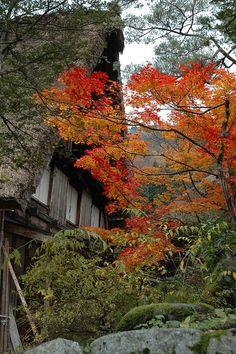 ✮ Shirakawago, Japan