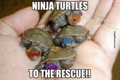 Im gonna buy myself turtles and do this