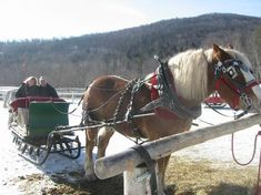 Gentle Giants Sleigh & Carriage Rides, Stowe. Sunday afternoon.