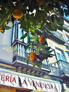 Bitterorangen wachsen auf Sevillas Straßen. Nur Touristen greifen danach und denken, das seien süße Orangen.   http://www.ferienwohnungen-spanien.de/Valencia-Provinz/artikel/naranjas-spaniens-orangen-sind-reif