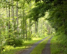 The Greenbrier River Trail, West Virginia  (the longest rail-trail in West Virginia)