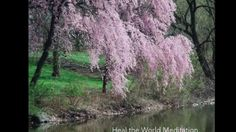 Kwanzan Cherry Tree Problems Garden Guides, grown from cuttings Trees And Shrubs, Flowering Trees, Trees To Plant, Cherry Blossom Tree, Blossom Trees, Cherry Tree Tattoos, Blossom Tree Tattoo, Tattoo Tree, Weeping Cherry Tree