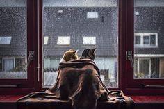 Картинка 880x587 | Фото с влюбленными котиками | Животные, Любовь, фото #картинки#фото#животные#коты#любовь#кошки#под_пледом#дождь#скороновыйгод#вжух