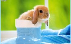Tiere Hase  Wallpaper