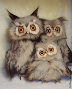 Three beautiful and expressive Owls Felt Animals, Animals And Pets, Baby Animals, Funny Animals, Cute Animals, Beautiful Owl, Animals Beautiful, Owl Bird, Pet Birds