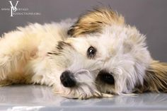 So SWEET Beautiful Dogs, Chinese, Sweet, Animals, Cute Dogs, Candy, Animales, Animaux, Animal