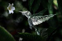 Mechanical humming bird