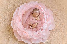 Огромное спасибо за фото @newborns_land ! Невероятно осознавать, что мой цветок является частью этой красоты! ♡♡♡ #paperflowers #paper #paperdecor #photographer #photo #photography #photonewborn #newborn #giantpaperflowers #flowers #peony #peonies