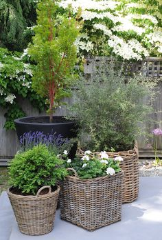 French provence perennial inspiration for your garden by West Coast Gardens