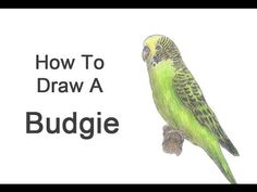 4 Easy Tutorials for Drawing Budgies. Pick Your Favorite. - http://www.parrotshop.org/easy-drawing-budgies/