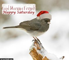 Shop Merry Christmas Bird Postcard created by PicsAsPassion. Personalize it with photos & text or purchase as is!