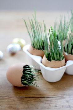 DIY: wheat grass Easter eggs If growing your own Easter grass strikes you as a harebrained idea, well maybe it is. 'Tis the season, after all. Easter Crafts, Crafts For Kids, Easter Decor, Deco Nature, Diy Ostern, Wheat Grass, Deco Table, Egg Shells, Happy Easter