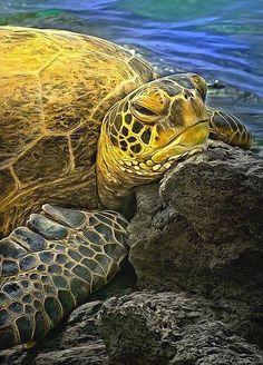 Sea Turtle - sea and ocean life Beautiful Creatures, Animals Beautiful, Cute Animals, Cute Turtles, Sea Turtles, Fauna Marina, Tortoise Turtle, Turtle Love, Underwater Life