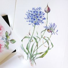 The selection of watercolor flowers below is by Moscow, Russian Federation based artist Natalia Tyulkina. She specialises in surface design and watercolor