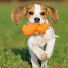21 Food-Inspired Dog Names That Are Actually Really Cute