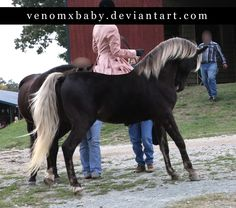 Google Image Result for http://www.deviantart.com/download/144502757/silver_dapple_rocky_horse_3_by_venomxbaby.jpg