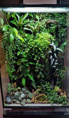 An incredible varied vivarium. Tree Frog Terrarium, Gecko Terrarium, Aquarium Terrarium, Reptile Terrarium, Terrarium Plants, Planted Aquarium, Reptile Habitat, Reptile Room, Reptile Cage
