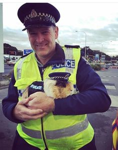 I have to say Constable Guinea Pig sure does look capable and determined