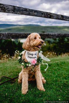 Eric and Ashley's Wedding in Snowshoe, West Virginia Farm Wedding, Summer Wedding, Dream Wedding, Boho Wedding, Snowshoe, Dog Wedding Outfits, Wedding Couples, Dog Signs, Wedding Inspiration