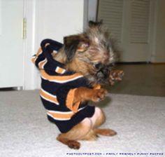 YO DOG I LIKE HIP-HOP