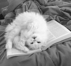 """""""Let's go get ice cream already, jeez. You've been reading for like an hourrrrr."""" 