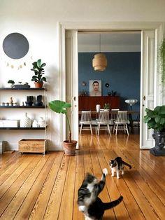 Bei MiMaMeise sind die Katzen los! #altbau #dielenboden #katze #midcentury #jugendstil #vintage #zimmerpflanzen #wohnen #living #wohnen #wohnideen #einrichten #interior #COUCHstyle #catcontent