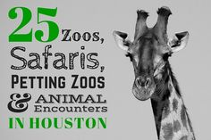 Zoos, Safaris, Petting Zoos and places to see animals in Houston & Galveston. Things to do in Houston with kids and families.