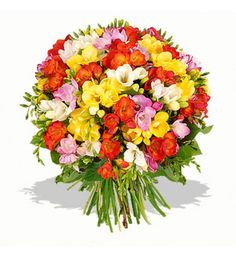 Unlike most other flowers where the white variations smell strongest, with freesias it is the red, pink and purple coloured flowers that are the most fragrant.