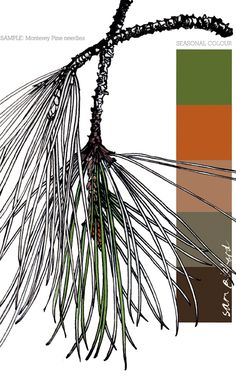 Planet Sam: Colour from the Season - Monterey Pine Needle green