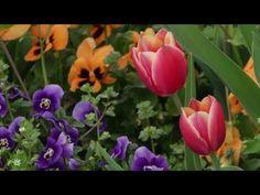 Grüße für einen schönen Tag - der Frühling beginnt - YouTube