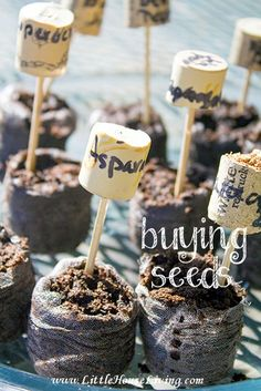 Some ideas on buying seeds...what to buy, where to get them from, and more!