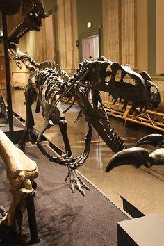 Ceratosaurus at the Kenosha Dinosaur Discovery Museum | Flickr - Photo Sharing!