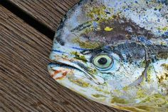 Dorado in Mauritius by FoxiCollection on Etsy