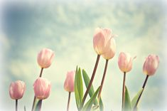 Flower Photography: 4 Quick Tips for Great Tulip Photos – PictureCorrect
