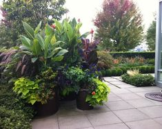 Tropical Landscape Design, Pictures, Remodel, Decor and Ideas - page 4 ~ Love the plants for around the pool