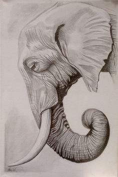 Elephant Sketch, Elephant Art, African Elephant, Elephant Trunk, Animal Sketches, Art Drawings Sketches, Animal Drawings, Elephant Tattoo Design, Elephant Tattoos