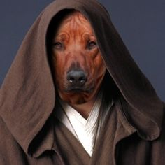 The Most Interesting Dog in the World - He is a Jedi Master.