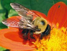 #Apicultura Lanzan #campaña para #salvaralasabejas de la muerte http://aga.cat/index.php/ca/articles/darreres-noticies/519-llancen-campanya-per-salvar-les-abelles-de-la-mort #miel #campanya #greenpeace #abelles #mel