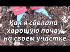 5 простых хитростей при выращивании клематисов от Нины Петруши и канала клематис ТV - YouTube