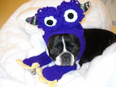 Boston Terrier Costume - Monster